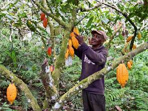 Ghana's cocoa production is being threatened - cocobod