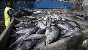 Ghana takes steps to boost fish export earnings
