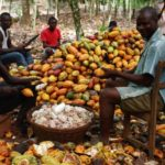 Ivory Coast, Ghana cancel cocoa sustainability schemes run by Hershey