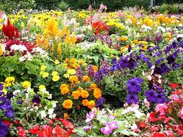 The Relevance of the Ghana Garden & Flower Movement On Ecotourism