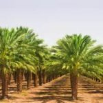 Africa Sustainable Palm Oil Conference to take place in Ghana