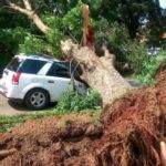 Tree crushes vehicle at Legon Campus