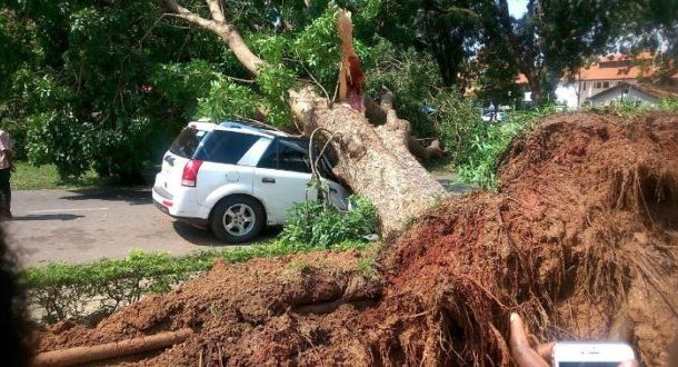 Tree crushes vehicle at Legon Campus