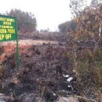 Ghana gets $24m to restore degraded forests