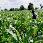 Agribusinesses apply for stimulus more than other sectors – NBSSI