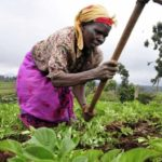 Group explores viable agric options in N/R