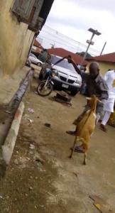 Video/Photos: A Nigerian man beats a goat for eating his Jollof