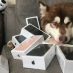 Chinese billionaire's son buys his dog eight iPhone 7s