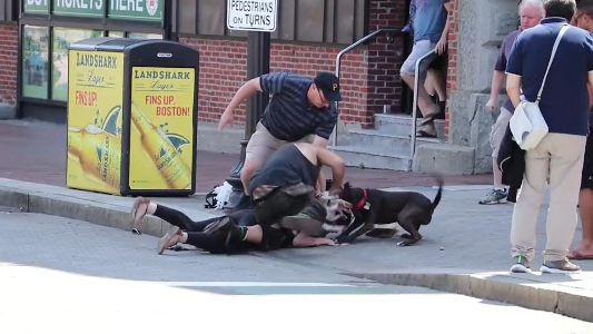 Video/Photos: Pitbull dog savages smaller dog and then mauls owner when she tries to intervene