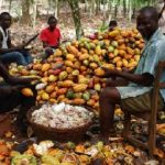 Cocoa Producer Price adjusted