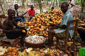 COCOBOD hits critics over new cocoa price