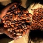 Gov't Increases Producer Price Of Cocoa By 11%