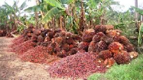Oil Palm Association launches strategic plan