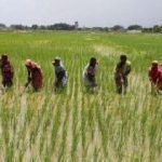 Sustainable Rice Systems Development in Sub-Saharan Africa project underway