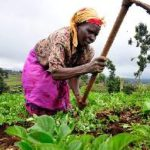Food insecurity to hit Ghana if... - Women in farming warn