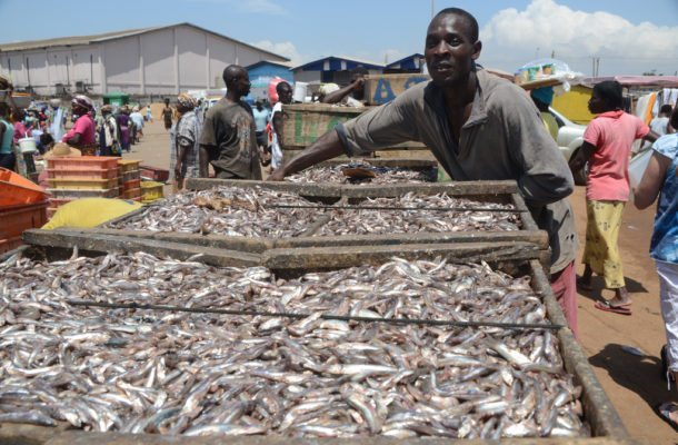 Fisheries sector transformation saves Ghana's oil & gas industry [Article]