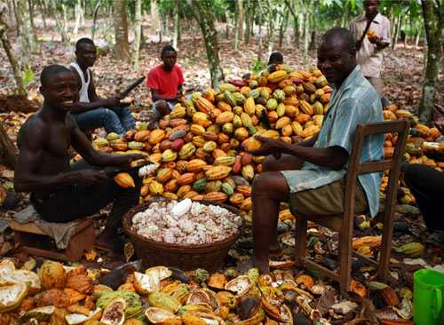 GAWU debunks attempts to reduce cocoa prices in Ghana