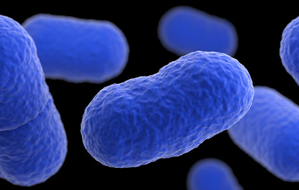 Government raises alertness over listeriosis in South Africa