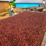 Suspend cocoa credit - Cocoa Clerks Association to members