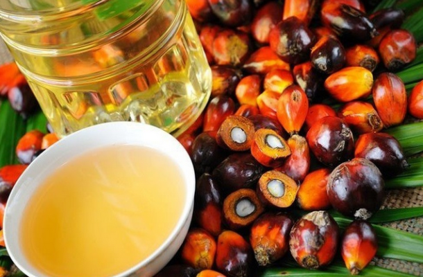 "Ghana,Indonesia fight EU against ""negative palm oil campaign"""
