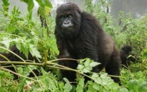 Why tourists go to Virunga National Park