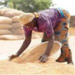 Nigeria to close border with neighbouring country over poisonous rice