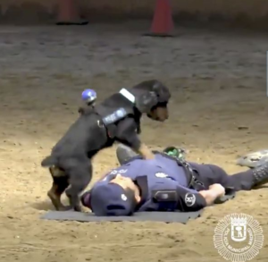 VIDEO: Dog performs CPR on collapsed Police Officer