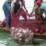 Place electronic monitoring systems on fishing vessels - Gov't urged