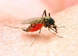 Malaria is caused by filth in the liver— Dr Asenso