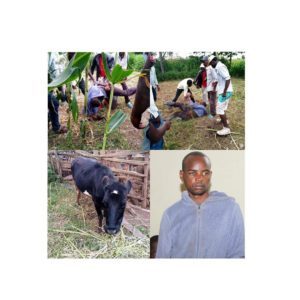PHOTOS: Man caught sleeping with cow, reveals why he prefers animals to girls