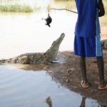 The African village where crocodiles and humans live side by side in peace