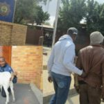 33-year-old man arrested for raping his neighbour's pregnant goat