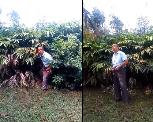 VIDEO: Chinese man caught defecating in neighbor's garden forced to collect it with his hands by angry Ghanaians