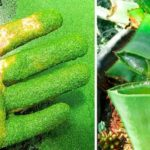 5 wild plants that can kill you and 5 that can save your life