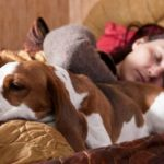 7 Things that happen when you share your bed with your dog