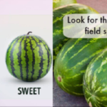 5 wonderful tips to pick the sweetest Watermelon