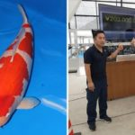 World's most expensive live fish bought for a $1.8m