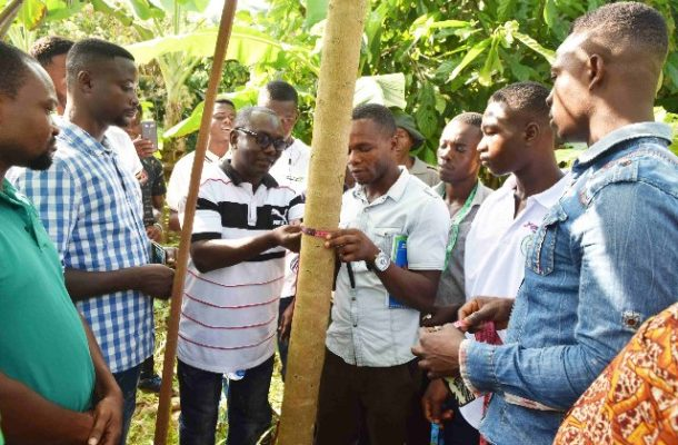 UNDP launches mobile App for cocoa tree registration