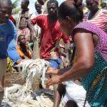 Ghana: Restoring Ghana's Mangroves and Depleted fish stock