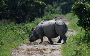 Rhino Creates Ruckus at Indian Harvest Festival Gathering (VIDEO)