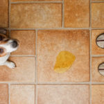 The ultimate guide to remove dog pee smell instantly