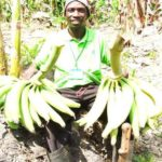 Agric Ministry targets new cash crops