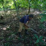 Palm oil industry expansion spurs Guatemala indigenous migration