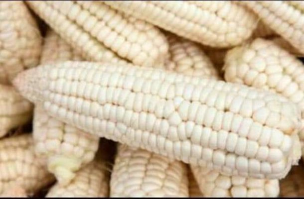 PFJ: Ghana resumes export of maize, other foodstuff