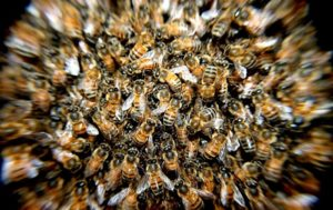 'Scared to Death': Four Live Bees Pulled From Taiwanese Woman's Eye (PHOTOS)