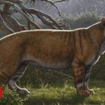 'Giant lion' fossil found in museum drawer