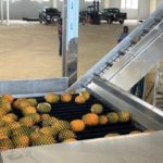 Ekumfi 1D1F factory begins Test-Run