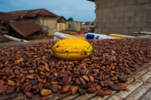 Ghana has not failed to secure buyer for 2020/21 beans – COCOBOD denies report
