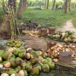 Minister urges Ghanaians to venture into coconut production