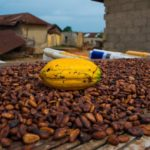 Ghana sets target of  850,000 tonnes of cocoa production in 2019/20 season